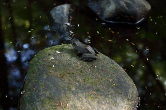 """Frog on a rock."""